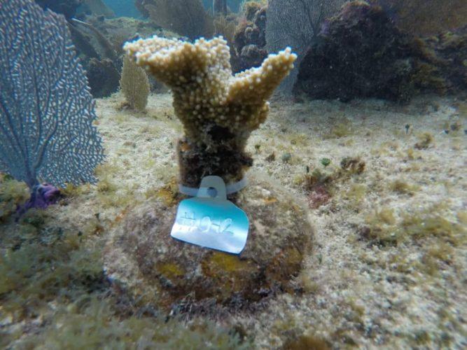 FPMC-arrecife1-667x500.jpg