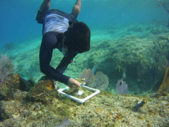 FPMC-arrecife5-585x439-1.jpg