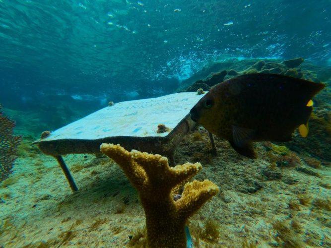 FPMC-corales1-667x500.jpg