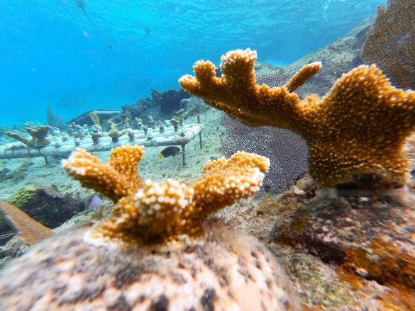 FPMC-corales3-585x439-1.jpg